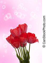 春, チューリップ, 美しい, 赤い花