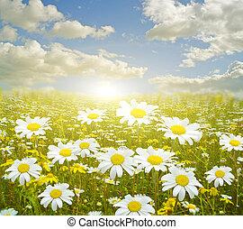 春, ビーム, 背景, 季節, 日の出, 花, 牧草地