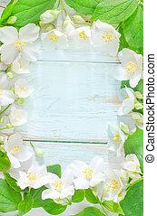 春, フレーム, ジャスミン, 背景, 白い花
