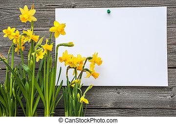 春, メッセージ, ラッパズイセン