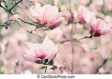 春, モクレン, 花