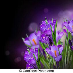 春, 上に, クロッカス, 黒, デザイン, 花