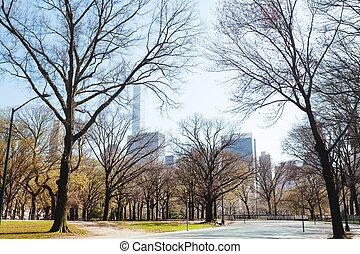春, 公園, 時間, によって, 新しい, 木, 中央である, ヨーク