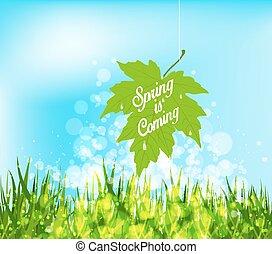 春, 到来, 葉, 掛かること