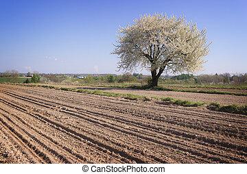 春, 単一, 開くこと, 木