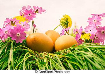 春, 卵, 花, イースター
