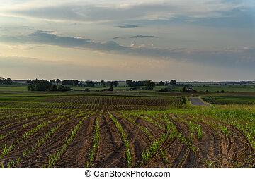 春, 収穫, フィールド, 植えられた, 農業, 新たに