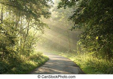 春, 夜明け, 森林