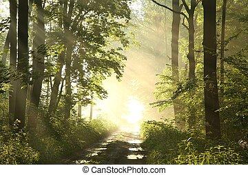春, 夜明け, 森, 道