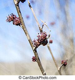 春, 小枝, つぼみ