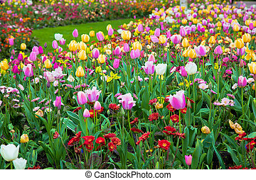 春, 庭, 花, カラフルである, 夏