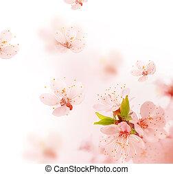 春, 微風