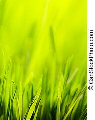 春, 抽象的, 緑の背景, 自然