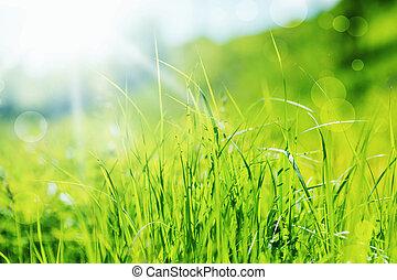 春, 抽象的, 自然, 背景