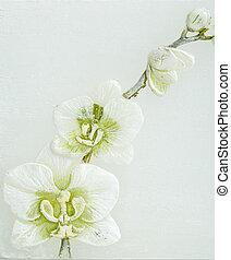 春, 抽象的, 花, 背景