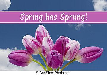 春, 持つ, メッセージ, 飛びかかった