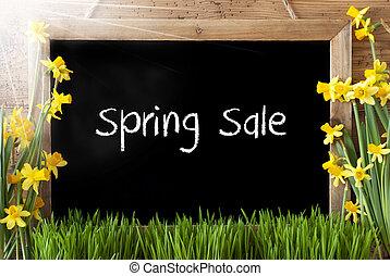 春, 日当たりが良い, セール, スイセン, テキスト, 黒板