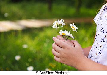 。, 春, 日当たりが良い, バックグラウンド。, 手, 終わり, ヒナギク, child.