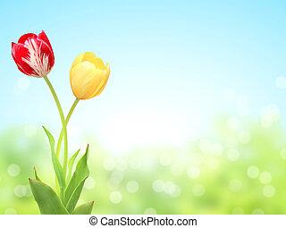 春, 日当たりが良い, 2, 背景, チューリップ