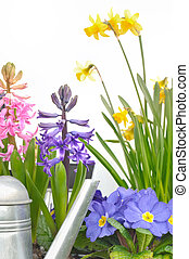 春, 明るい, 花