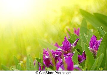 春, 明るい, 花, 日光