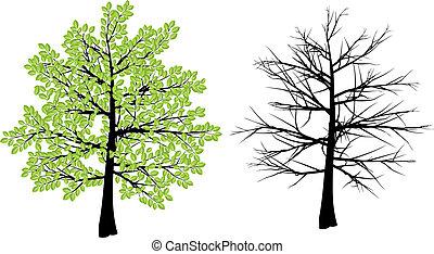 春, 木の 冬