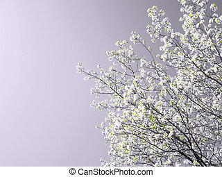 春, 木, 花で