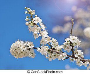 春, 木。, 花