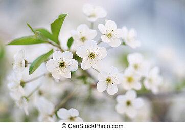 春, 木, flower.