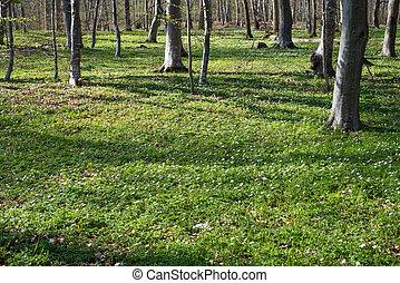 春, 林床