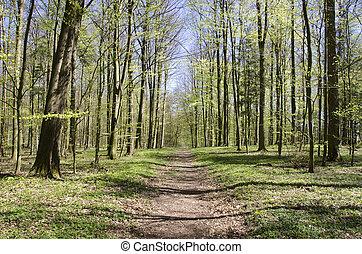 春, 森林パス
