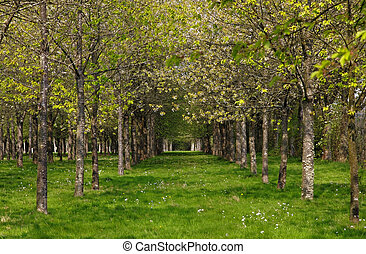 春, 森林