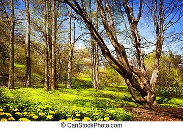 春, 森林, 道, シラカバ
