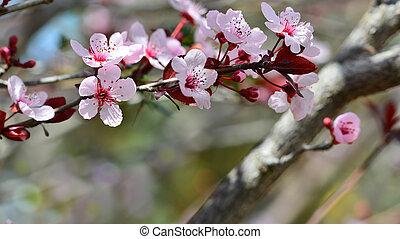 春, 構成, の, 自然