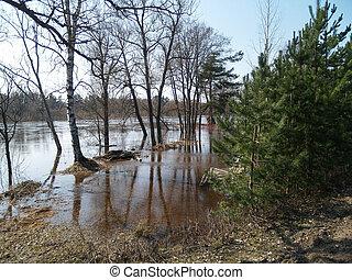 春, 洪水, 川, gauja, 木