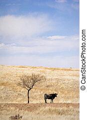 春, 牧場, 草, 牛を牧草を食べること