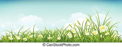 春, 牧草地, ∥で∥, ヒナギク