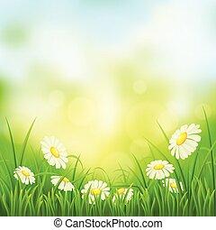春, 牧草地, ヒナギク