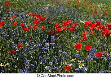 春, 牧草地