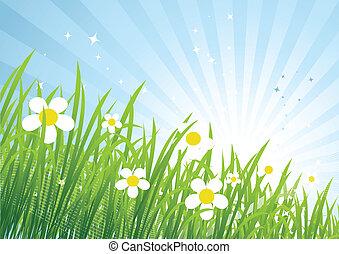 春, 牧草地, 美しい