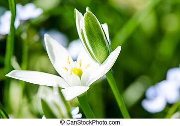 春, 白い花
