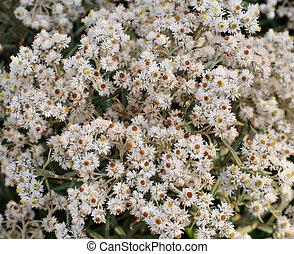 春, 白い花, 自然, 背景
