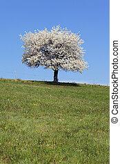 春, 白, 草, 木, 緑