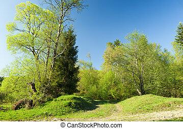 春, 緑の採草地, 日没, 森林