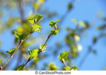 春, 緑は 去る