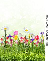 春, 美しい, 背景