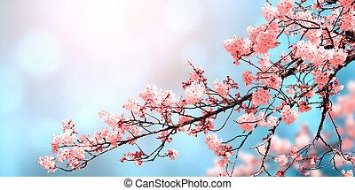 春, 美しい, 自然, 花, sakura, 背景
