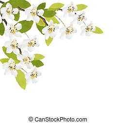 春, 背景, ∥で∥, 白, flowers., vector.