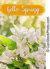 春, 背景, 花, text., こんにちは