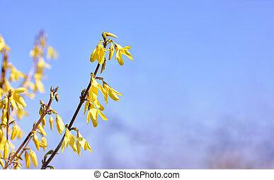 春, 背景, flowers., 黄色, 咲く